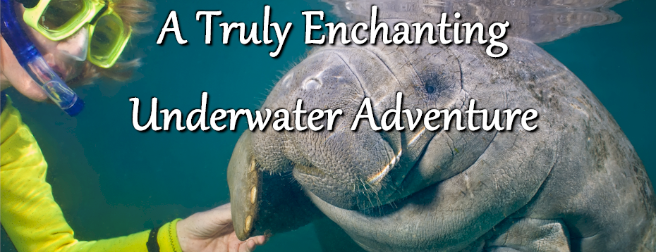 Enchanting Underwater Adventure